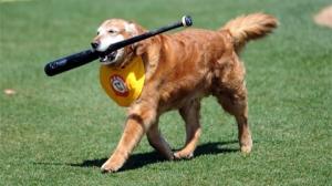 Trenton Thunder Bat Dog Chase