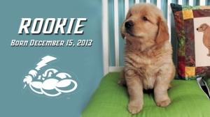 Trenton Thunder New Bat Dog Named Rookie