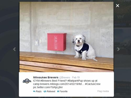 Milwaukee Brewers Twitter Hank in Dugout