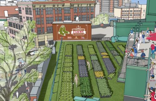 Boston Red Sox Fenway Farms Rendering